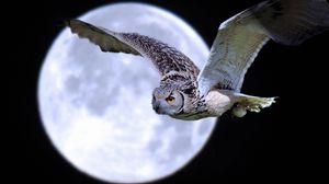 Превью обои сова, птица, хищник, луна, полет