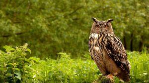 Превью обои сова, птица, трава, зелень, хищник