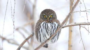 Превью обои сова, ветка, зима, птица