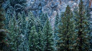 Превью обои сша, калифорния, йосемити, деревья, лес