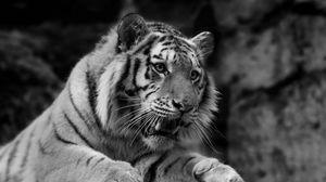 Превью обои тигр, дикая кошка, хищник, морда