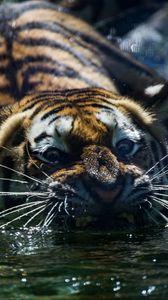 Превью обои тигр, оскал, вода, хищник, морда, усы