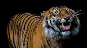 Превью обои тигр, улыбка, хищник, оскал
