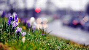 Превью обои трава, цветы, растение, лето