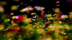 Превью обои трава, цветы, растение, макро