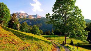 Превью обои трава, деревья, поворот, лето