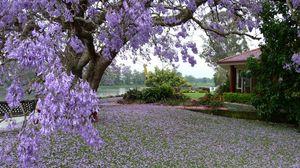 Превью обои трава, деревья, весна, здание