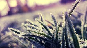 Превью обои трава, иней, лед, макро