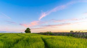 Превью обои трава, поле, дерево, небо, лето