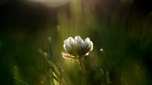 Превью обои трава, размытость, растение