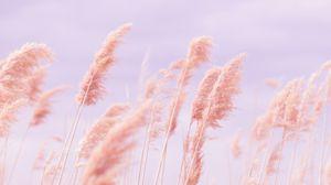 Превью обои трава, ветер, розовый, поле