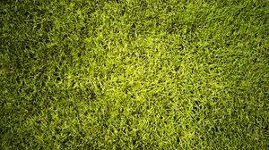 Превью обои газон, трава, зелень, текстура, зеленый