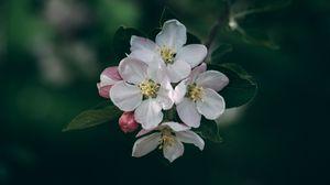 Превью обои цветение, весна, цветы, ветка, размытость