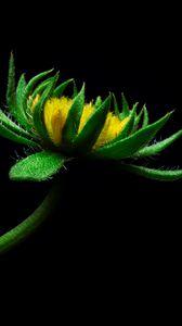 Превью обои цветок, подсолнух, искусственный