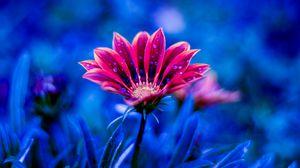 Превью обои цветок, роса, капли, лепестки, синий
