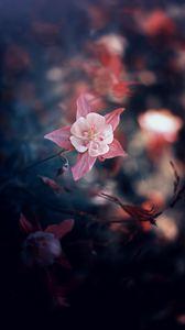 Превью обои цветок, розовый, цветение, размытость, листья, лепестки