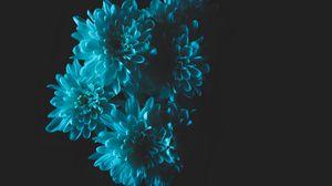 Превью обои цветы, голубой, лепестки, букет