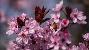 Превью обои цветы, пчела, лепестки, весна