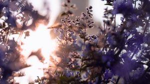 Превью обои цветы, синий, солнечный свет, растение, цветение