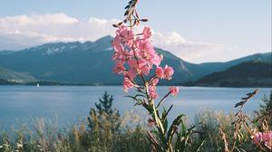 Превью обои цветы, трава, пейзаж, горы, озеро