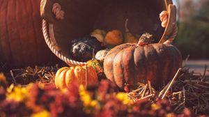 Превью обои тыква, корзина, солома, осень, урожай