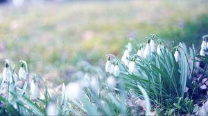 Превью обои весна, подснежники, трава, свет, март