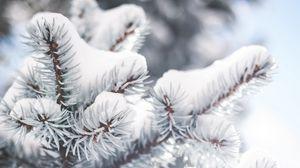 Превью обои ветка, иголки, снег, зима, размытость