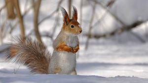 Превью обои ветки, снег, хвост, зима, белка