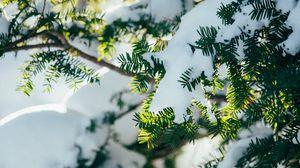 Превью обои ветки, снег, растение, зима