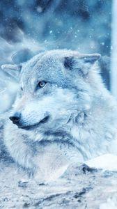 Превью обои волк, хищник, фотошоп, взгляд