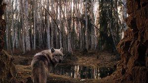 Превью обои волк, лес, деревья, пасмурно
