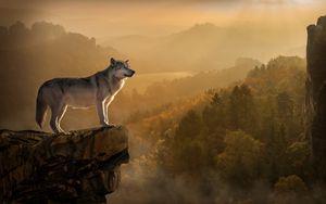 Превью обои волк, скала, обрыв, хищник