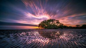 Превью обои восход, океан, море, берег, дерево