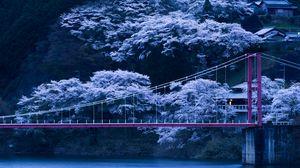 Превью обои япония, мост, сакура, ночь