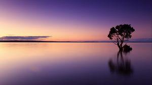 Превью обои закат, дерево, озеро, небо, вода, вечер, пурпурный