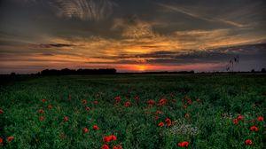 Превью обои закат, поле, маки, пейзаж