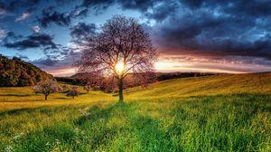 Превью обои закат, поле, небо, дерево, пейзаж