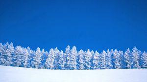 Превью обои зима, голубой, белый, небо, чистое, деревья