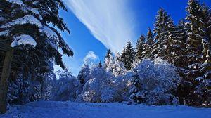 Превью обои зима, лес, снег, небо