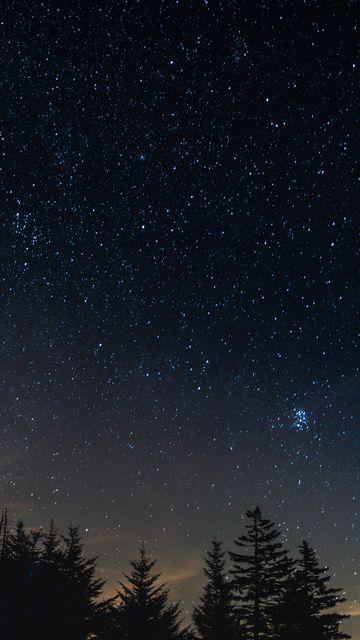 360x640 Обои звездное небо, ночь, деревья, ночной пейзаж