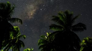 Превью обои звездное небо, пальмы, ветки, листья, ночь