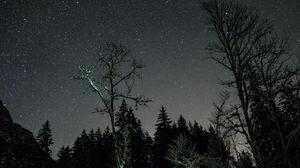 Превью обои звезды, ночь, небо, деревья